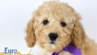 Piper_Apollo_Feb11_9Wk_Ms.Purple_02