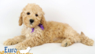 Piper_Apollo_Feb11_9Wk_Ms.Purple_03