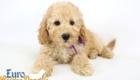 Piper_Apollo_Feb11_9Wk_Ms.Purple_04