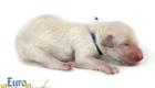 Bella_Becks_Jul29_Newborn_MrBlue