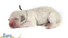 Bella_Becks_Jul29_Newborn_MrBrown