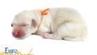 Bella_Becks_Jul29_Newborn_MrOrange