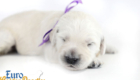 Olive_Kai_Jul18_2WK_MsPurple_07