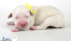 Olive_Kai_Jul18_Newborn_MsYellow_01