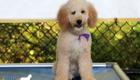 Piper_Apollo_Feb20_5Months_Ms Purple (10)