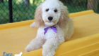 Piper_Apollo_Feb20_5Months_Ms Purple (6)