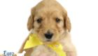 Mia_Apollo_Aug_2020_Ms Yellow_4wks2