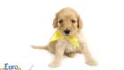 Mia_Apollo_Aug_2020_Ms Yellow_4wks3