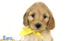 Mia_Apollo_Aug_2020_Ms Yellow_6wks_1