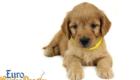 Rosie_Apollo_Aug_2020_Mr Yellow_6wks_4