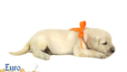 Elsa_Bentley_Sep_2020_Ms Orange_3WK_1 (1)