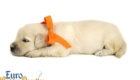 Elsa_Bentley_Sep_2020_Ms Orange_3WK_1 (5)
