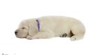 Abby Kai Sep 2020 Ms. Purple Selects 002