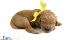 Kami_Koji_Jan2021_1WK_Ms Yellow_5