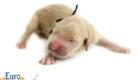 Kami_Koji_Jan2021_Newborn_MrBlack_1
