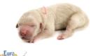Kami_Koji_Jan2021_Newborn_MsPeach_4