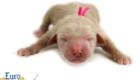 Kami_Koji_Jan2021_Newborn_MsPink_1