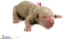 Kami_Koji_Jan2021_Newborn_MsPink_2