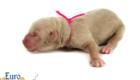 Kami_Koji_Jan2021_Newborn_MsPink_4
