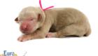 Kami_Koji_Jan2021_Newborn_MsPink_5