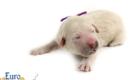 Kami_Koji_Jan2021_Newborn_MsPurple_2