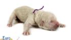 Kami_Koji_Jan2021_Newborn_MsPurple_4