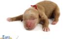 Kami_Koji_Jan2021_Newborn_MsRed_4
